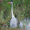 Pantanal Mato-grossense na cheia