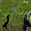 Pantanal Mato-grossense na seca
