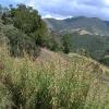 Passeio no Trem da Serra da Mantiqueira em Passa Quatro, MG (vídeo)