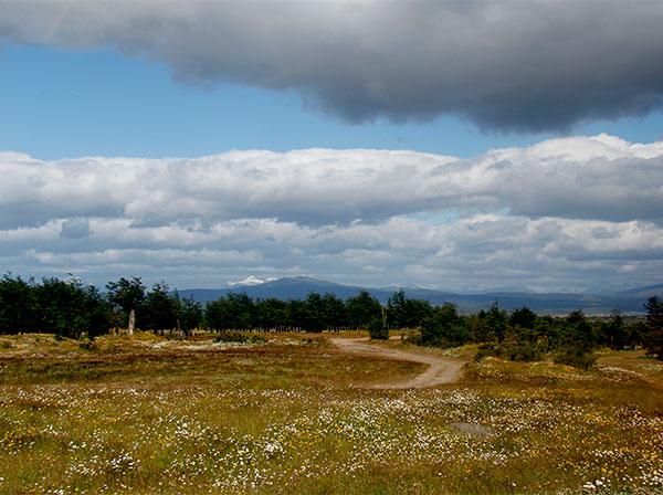 No verão, as flores enfeitam a paisagem da Patagônia Chilena