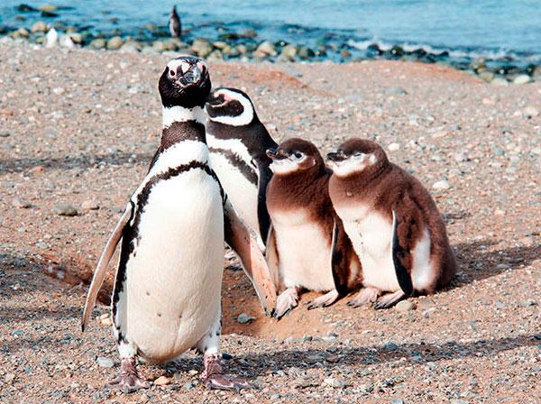 Uma família tradicional na ilha - Isla Magdalena, Punta Arenas, Chile - Foto: Amandina Morbeck.