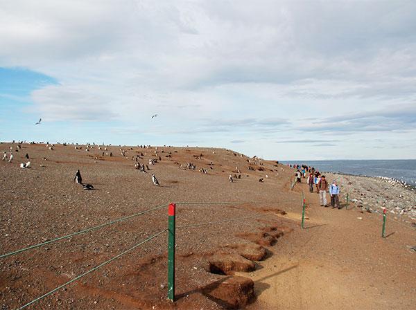 Turistas só podem caminhar na trilha demarcada - Isla Magdalena, Punta Arenas - Chile - Foto: Amandina Morbeck.