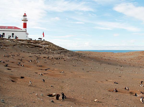 Farol no ponto mais alto da ilha - Isla Magdalena, Punta Arenas, Chile - Foto: Amandina Morbeck.