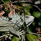 Pantanal de Mato Grosso do Sul - www.viajandocomaman.com.br - Foto: Amandina Morbeck.