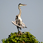 Pantanal Mato-grossense - www.viajandocomaman.com.br - Foto: Amandina Morbeck.