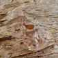 Sítio Arqueológico da Pedra Pintada, Cocais, Minas Gerais - www.viajandocomaman.com.br - Foto: Amandina Morbeck.
