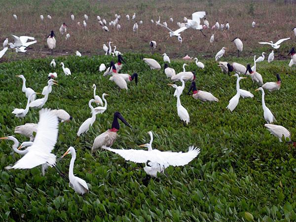 No Pantanal Mato-grossense - Não existe apenas um Pantanal - www.viajandocomaman.com.br - Foto: Amandina Morbeck.