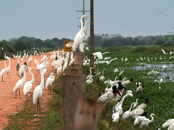 No Pantanal Mato-grossense a vida acontece onde tem água - Um pouco sobre o Pantanal - www.viajandocomaman.com.br - Foto: Amandina Morbeck.