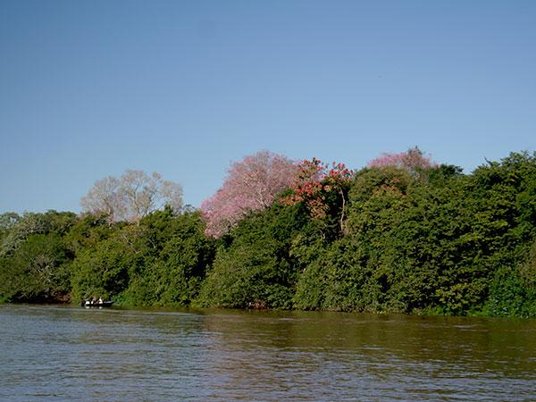 Rio Miranda, Pantanal Sul - Não existe apenas um Pantanal - www.viajandocomaman.com.br - Foto: Amandina Morbeck.