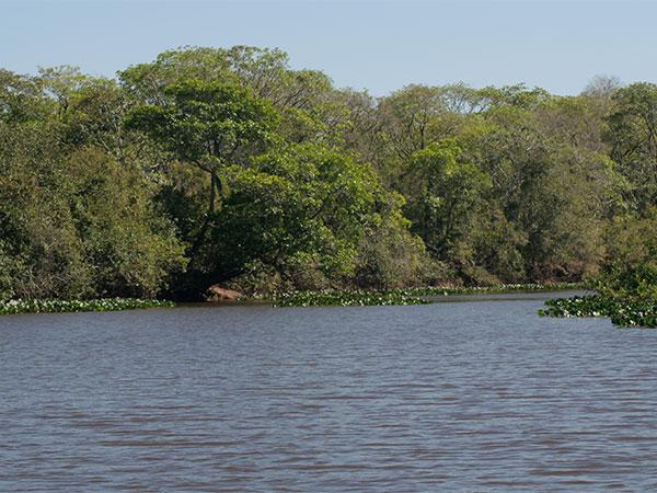 Rio Vermelho - Pantanal de Mato Grosso do Sul - www.viajandocomaman.com.br - Foto: Amandina Morbeck.