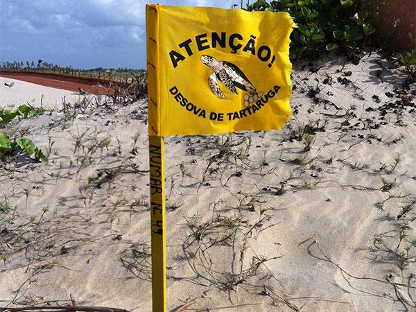 Bandeira que indica a existência de um ninho de tartaruga - www.viajandocomaman.com.br - Foto: Amandina Morbeck.