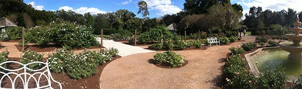 Jardim das Rosas - Harry P. Leu Gardens em Orlando, Flórida - Foto: Amandina Morbeck.