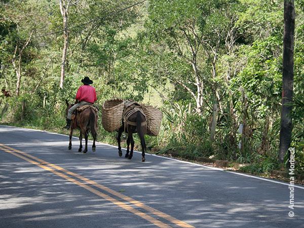 Cavaleiro na estrada em São Bento do Sapucaí - Foto: Amandina Morbeck.