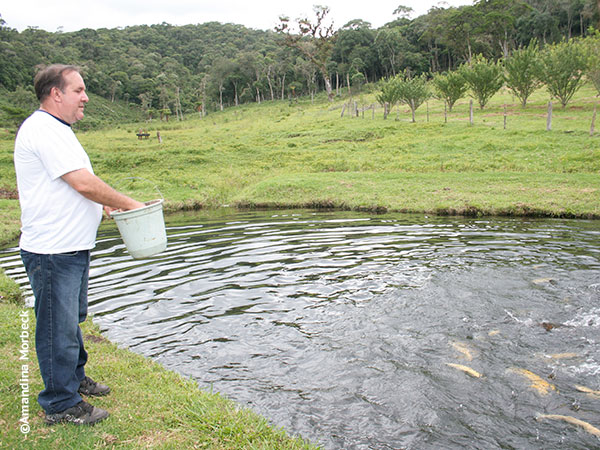 Altair alimenta as trutas-matrizes na Trutaria Lago Azul - Foto: Amandina Morbeck.
