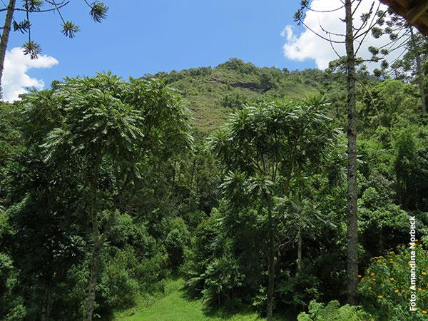 Pedra do Barnabé vista de sua base na Floresta Barnabé - Foto: Amandina Morbeck.