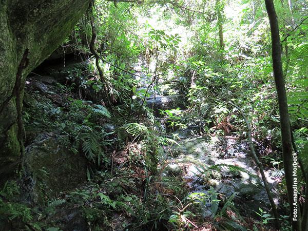 Natureza intocada na Floresta Barnabé em Gonçalves, Minas Gerais - Foto: Amandina Morbeck.