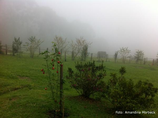 goncalves-fog