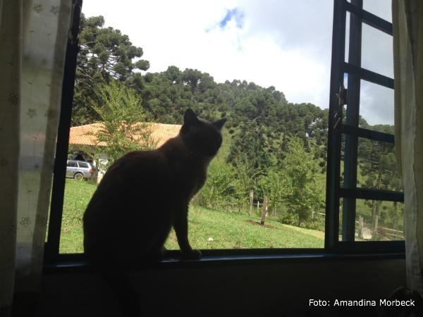 goncalves-gato-janela