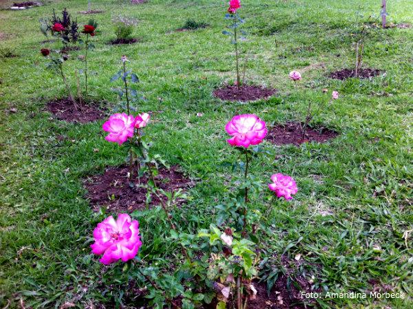 goncalves-jardim-rosas
