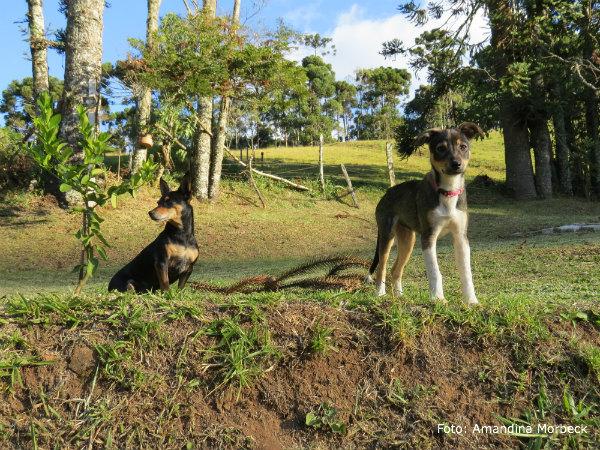 A grandona é a Pipoca e o outro é seu amigo Chiquinho.