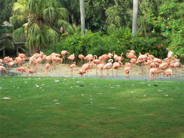 Pássaros no Busch Gardens em Tampa - Minha primeira vez na Disney - Foto: Rodrigo Duzzi.