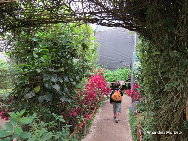 Borboletário Flores que Voam, Campos do Jordão, SP.